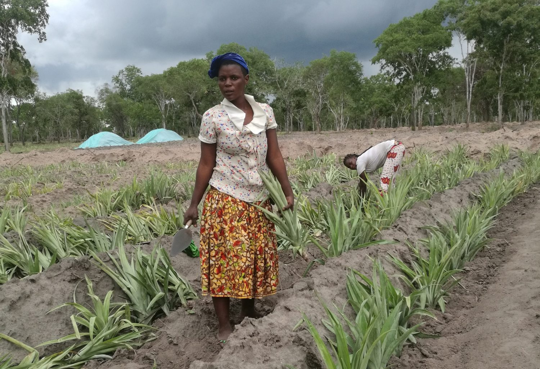 climate change farm tanzania