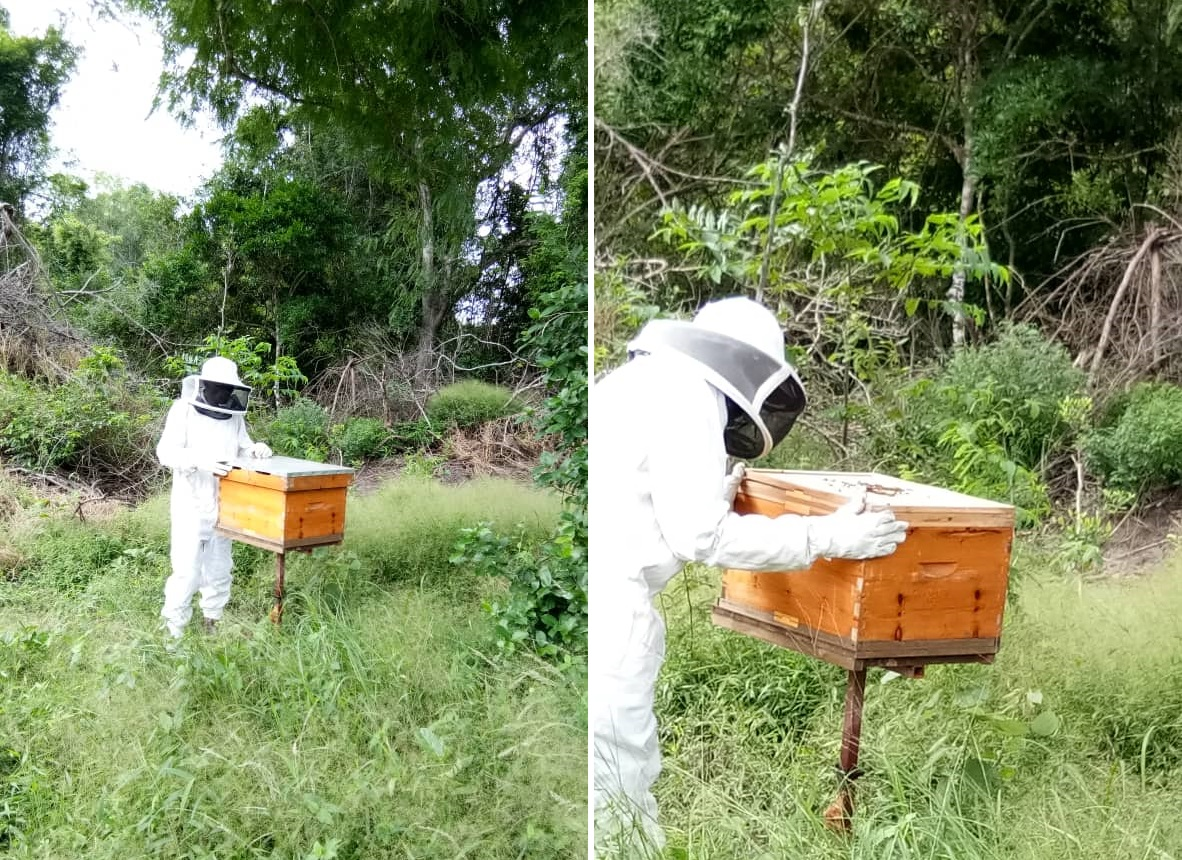 Elven Agri- Bee hive